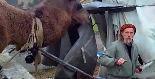 დიდ დიღომში აქლემი ბინადრობს