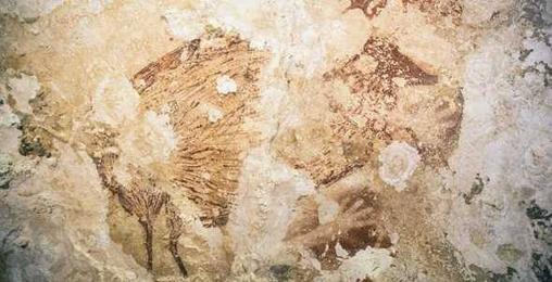 მეცნიერებმა  მხატვრობის უძველესი ნიმუშები იპოვეს