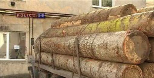 ხე-ტყის უკანონო მოპოვებისა და ტრანსპორტირების ფაქტი გამოავლინეს