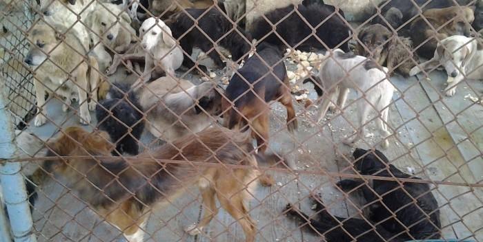 საქართველოს ცხოველთა დაცვის ორგანიზაცია ქუთაისის მერიას დანაშაულებრივ გარიგებებში ადანაშაულებს