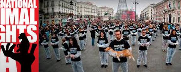 10 დეკემბერს  ცხოველთა უფლებების საერთაშორისო დღე აღინიშნება