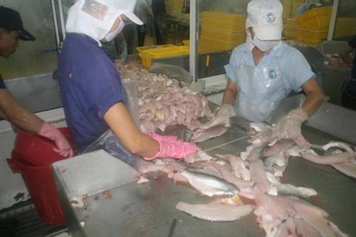 SOS- თევზი რომელიც არ უნდა იყიდოთ- რატომ დუმს ხელისუფლება?