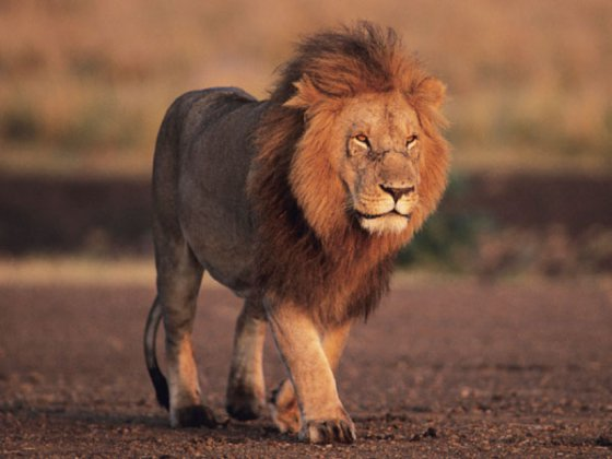 ლომი მარჯანიშვილისა და მელიქიშვილის ქუჩებზე